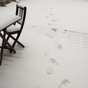 Die Vögel brauchen Futter im Winter