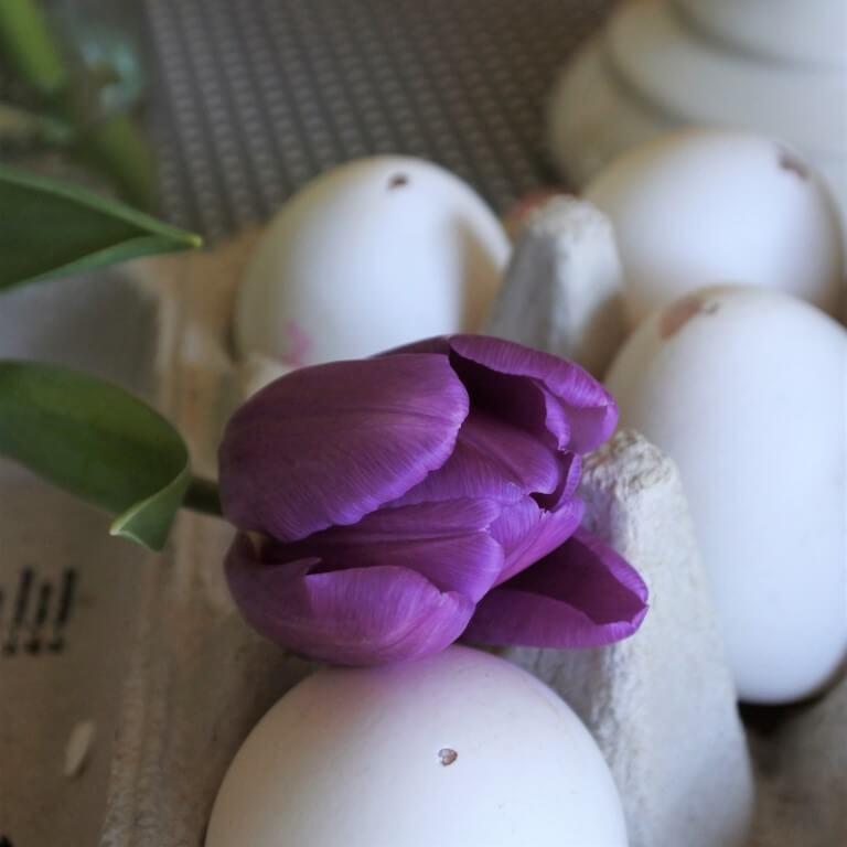 Wir pusten Eier zu Ostern aus, weil Conni das auch macht!