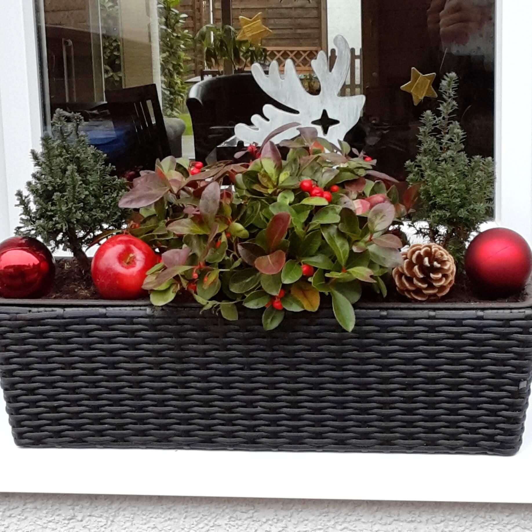 Pflanzen am Küchenfenster im Advent