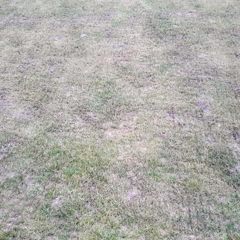 Frühjahrsmüder Rasen