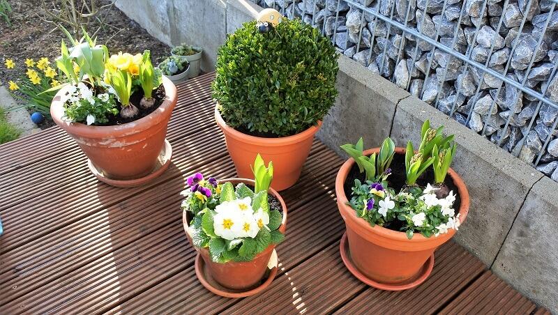 Frühlingsblumen auf der Terrasse