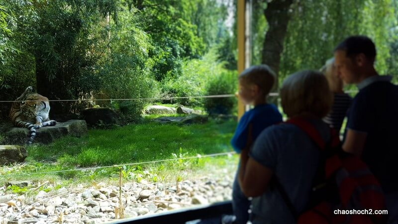 Tigerwatching
