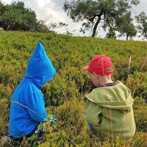 Kinder beim Blaubeer-Sammeln