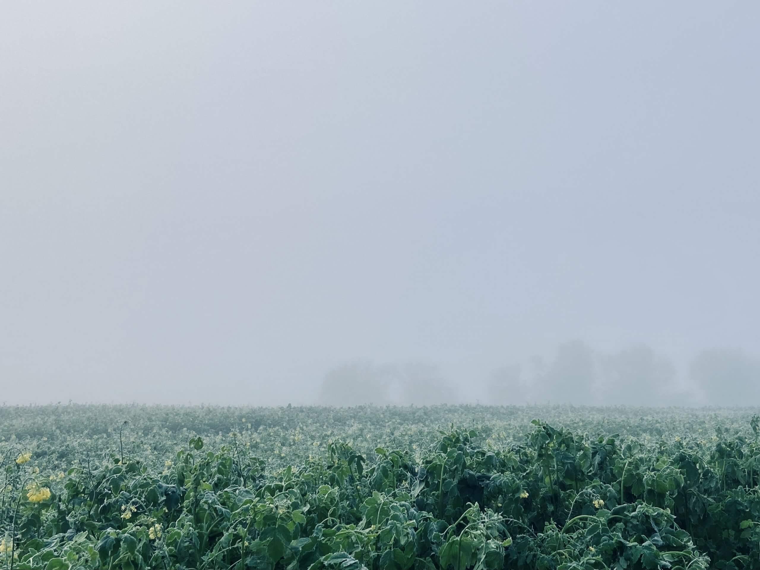 Nebel aufm Feld